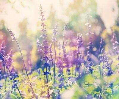 Adesivo Bonito, verão, fundo, alfazema, campo, fim, cima