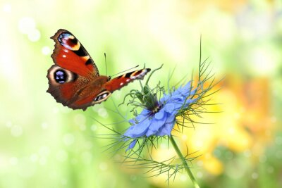 Adesivo borboleta 198