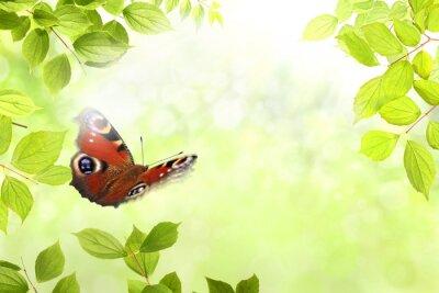 Adesivo borboleta 204