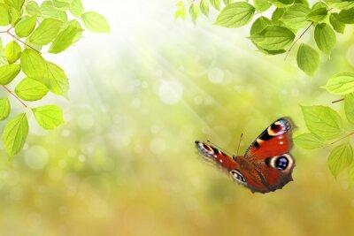 Adesivo borboleta 206