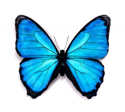 Adesivo Borboleta azul