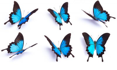 Adesivo Borboleta azul e colorido no fundo branco