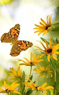 Adesivo Borboleta, flores, jardim, close-up