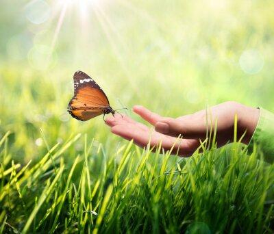 Adesivo borboleta na mão na grama