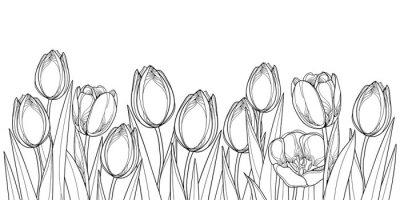 Adesivo Borda horizontal do vetor com flores da tulipa do esboço, broto e folhas ornamentado no preto isolado no fundo branco. Tulipas Contour para o design de primavera de saudação ou para colorir.