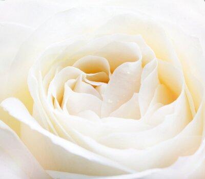 Adesivo branco delicado aumentou fim acima da imagem