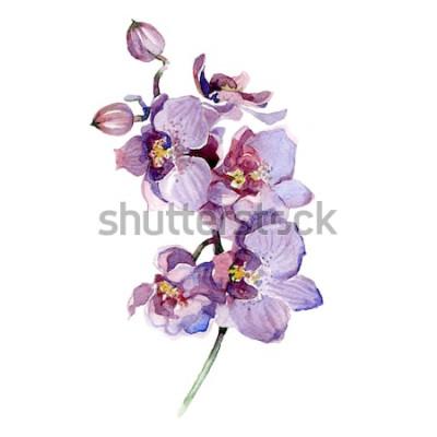 Adesivo Buquê de orquídea em aquarela isolado no fundo branco.