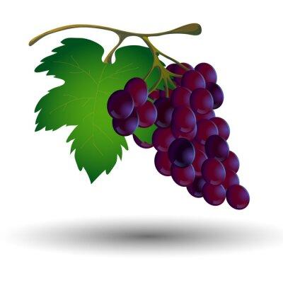Adesivo Cacho de uvas com uma folha em um fundo branco