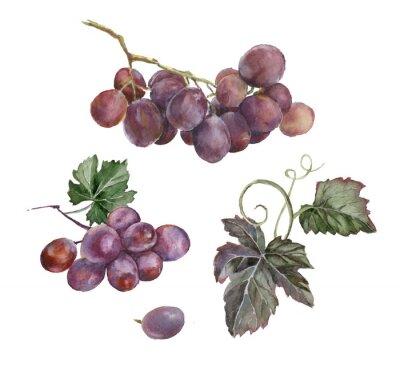 Adesivo cacho de uvas vermelhas da aguarela
