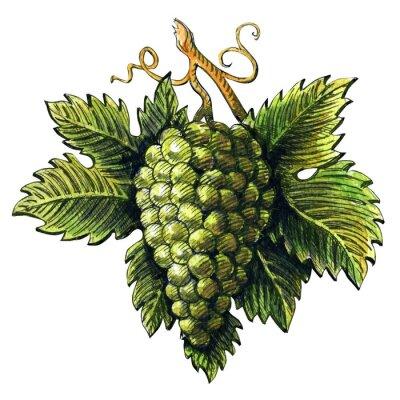 Adesivo Cacho, maduro, verde, uvas, watercolour, Ilustração, mão, desenhado