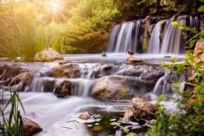 Adesivo Cachoeira no por do sol com pato do pato selvagem