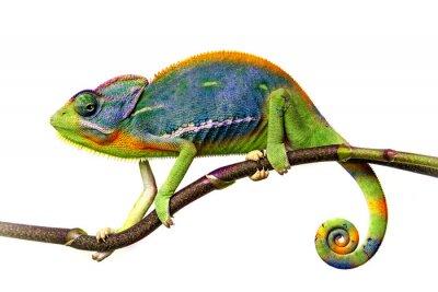 Adesivo camaleão