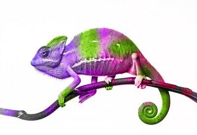 Adesivo Camaleão - cores