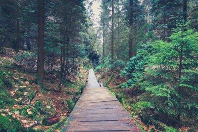 Adesivo Caminhada, caminho, dentro, floresta, paisagem