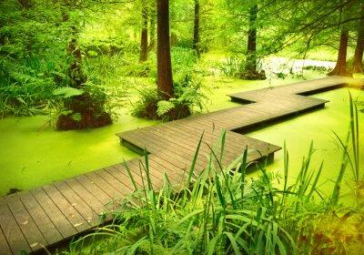 Adesivo Caminho moderno ou prancha sobre uma lagoa na floresta. Árvores velhas que estão em uma amarrar ou pântano na floresta. Raio de sol e luz suave caindo através das copas das árvores.