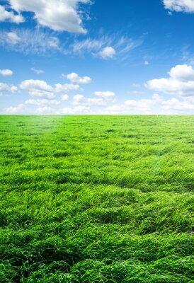 Adesivo Campo de grama e céu perfeito