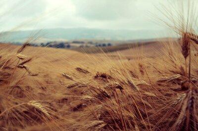 Adesivo Campo di grano