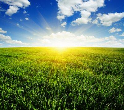 Adesivo Campo e sol