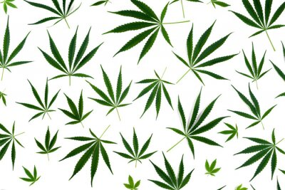 Adesivo Cannabis leaves of different sizes are isolated on a white background.