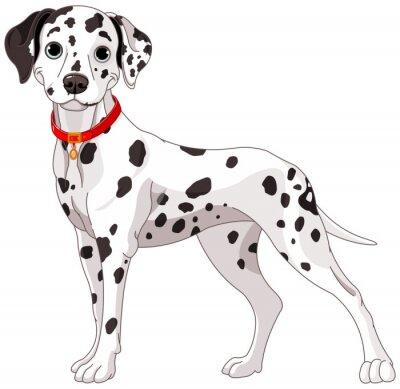Adesivo Cão bonito dálmata