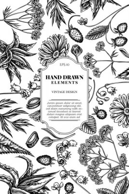 Adesivo Card design with black and white aloe, calendula, lily of the valley, nettle, strawberry, valerian