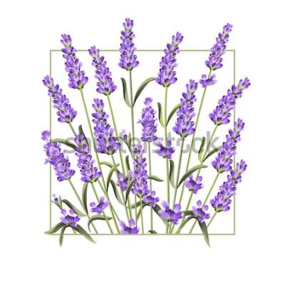 Adesivo Cartão elegante com flores de lavanda. O quadro de retângulo de lavanda e texto verão. Fronteira de lavanda para sua apresentação de texto. Ilustração vetorial