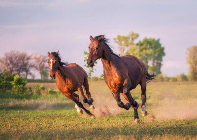 Adesivo cavalo