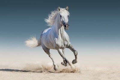 Adesivo Cavalo branco galopar corrida