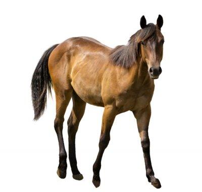 Adesivo Cavalo isolada