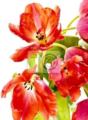 Adesivo Close up de tulipas vermelhas