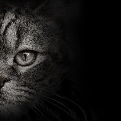 Adesivo Close-up escuro do gato do focinho. vista frontal