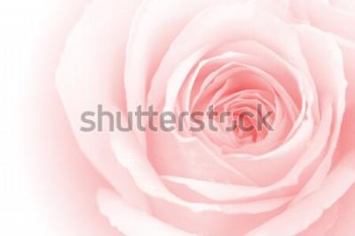 Adesivo closeup colorido pétalas de rosa para plano de fundo