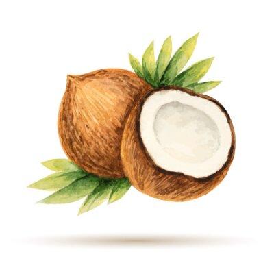 Adesivo Coco