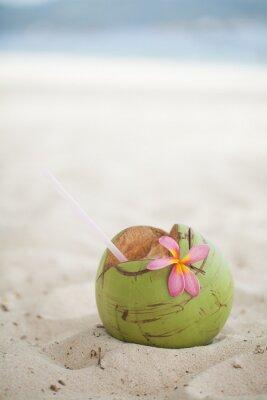 Adesivo Coco na praia