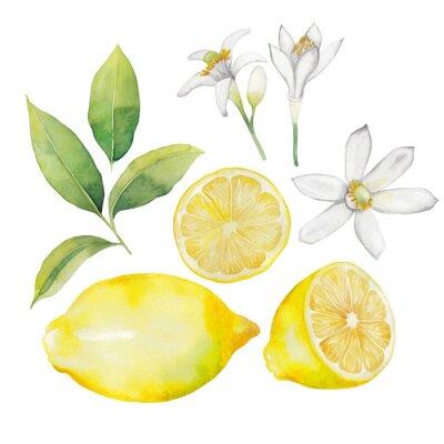 Adesivo Coleção de limão de aguarela