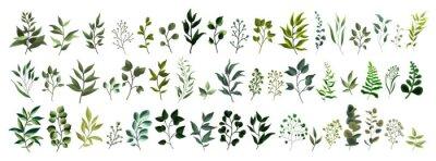 Adesivo Coleção de vegetação folha planta floresta ervas tropicais folhas