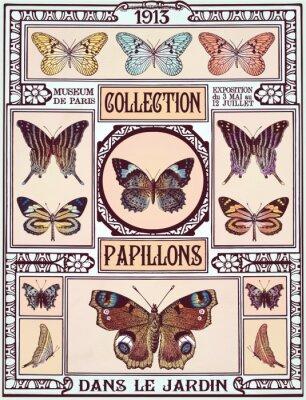 Adesivo Coleta de borboletas
