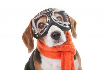 Adesivo conceito de férias de estimação, cão de óculos voando