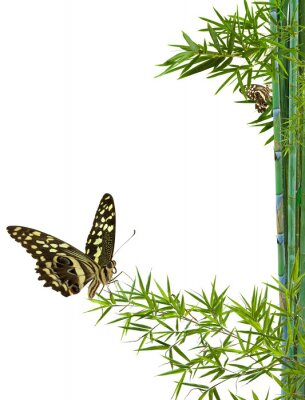 Adesivo conceito de natureza détente zen