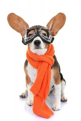 Adesivo conceito para viagens ou férias pet aviador