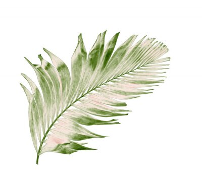Adesivo concept summer with green palm leaf from tropical . frond floral leaves branches tree isolated on white pattern background. flat lay, top view.