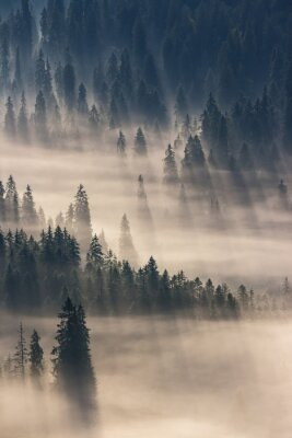 Adesivo Coniferous, floresta, nebuloso, montanhas