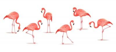 Adesivo Conjunto de flamingos exóticos, isolado no fundo branco. Mão-extraídas ilustração aquarela.