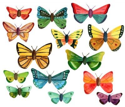 Adesivo Conjunto de muitas borboletas diferentes da aguarela no fundo branco