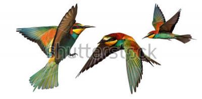 Adesivo conjunto de pássaros de cor em vôo isolado em um fundo branco