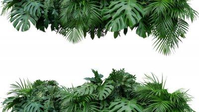Adesivo Contexto tropical da natureza do arranjo floral de arbusto da planta da folha das folhas isolado no fundo branco, trajeto de grampeamento incluído.