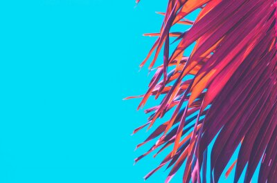 Adesivo Copy space pink tropical palm tree on sky abstract background. Summer vacation and nature travel adventure concept.