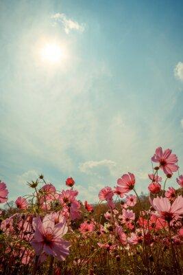 Adesivo Cosmos flor flor no jardim