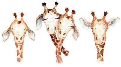 Adesivo Cute giraffes couple cartoon watercolor illustration animal set
