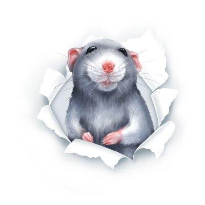 Adesivo Cute gray cartoon rat, paper breakthrough, digital painting